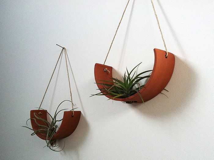 Wall hanging air plant natural