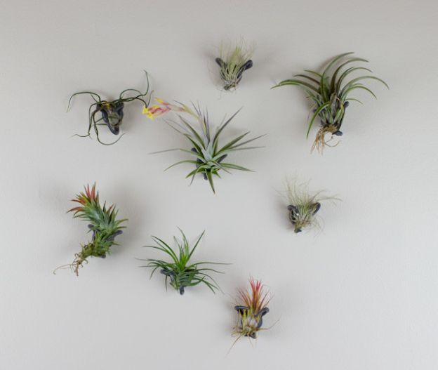 Wall hanging air plants
