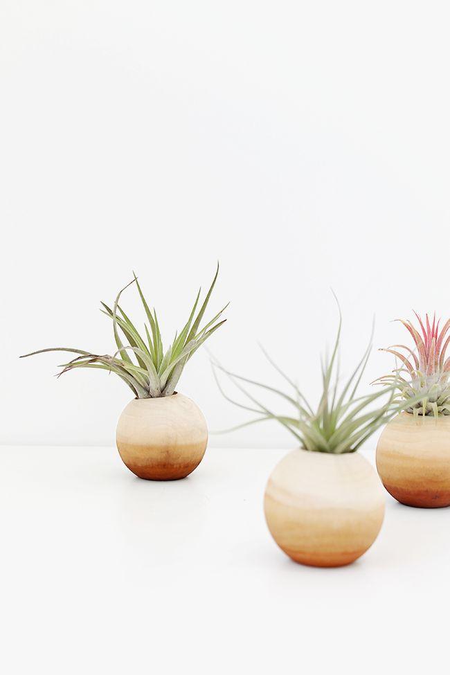 Wood air plant pots