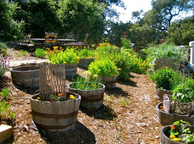 Wooden barrel types planter