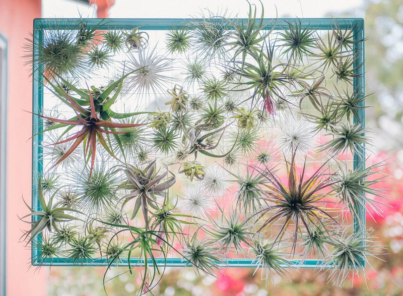 wire and frame air plants