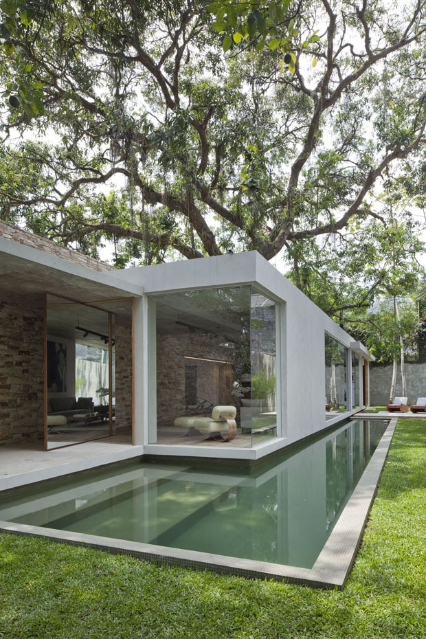 Brazilian house built around tree