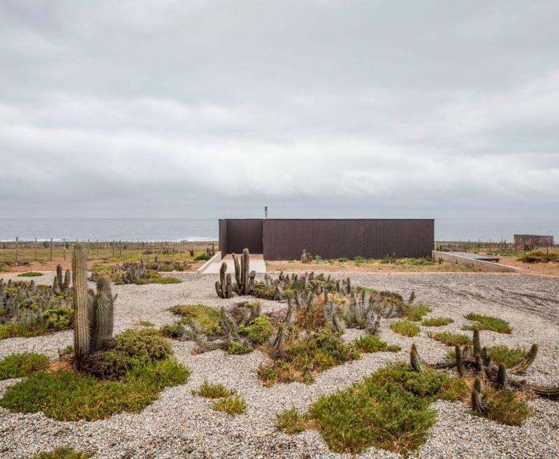 Casa C14 landscape with cacti