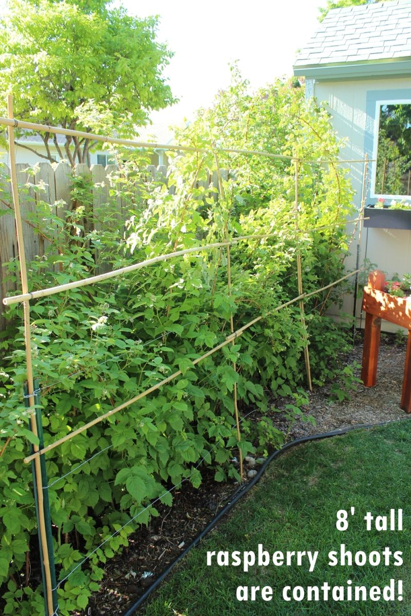 DIY Bamboo Plant Support Fence-bamboo is sturdy