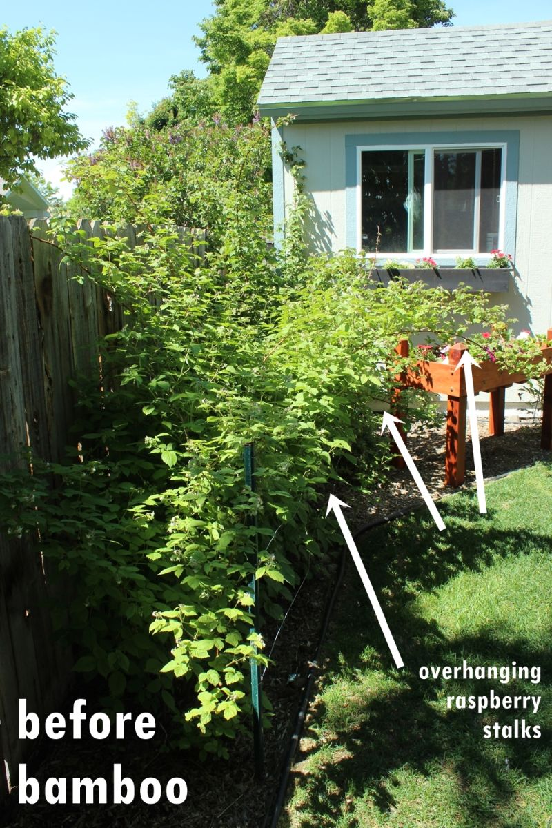 Diy plant supports - Diy Bamboo Plant Support Fence Before Project