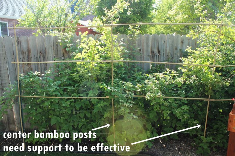 DIY Bamboo Plant Support Fence-center posts