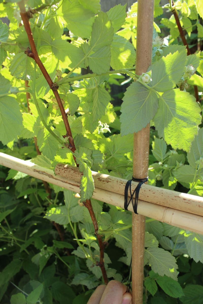Diy plant supports - Diy Bamboo Plant Support Fence For Your Backyard