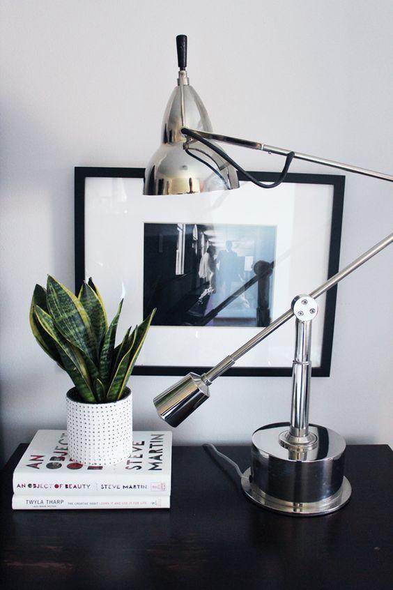 Desk snake plant