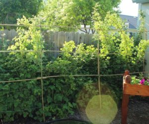 DIY Bamboo Plant Support Fence or Decorative Lattice