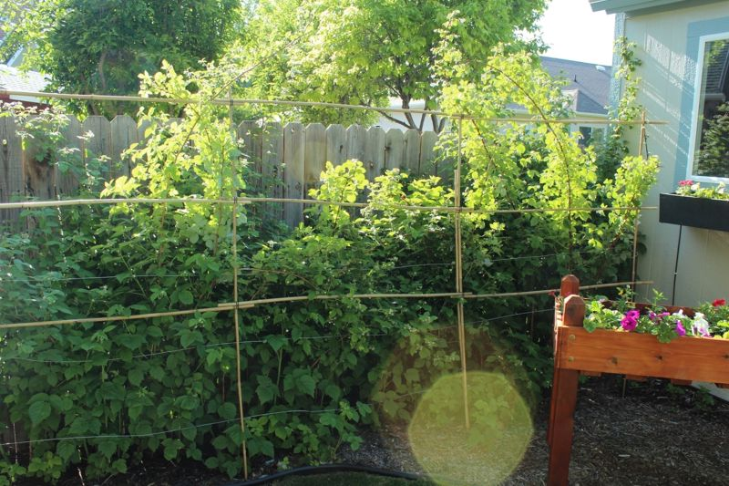 Garden Bamboo Plant Support Fence
