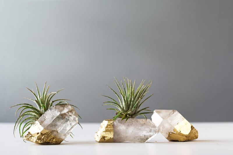 Gold Dipped Airplants