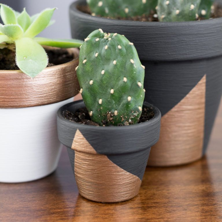 Modern Mini Painted Plant Pots gold accents