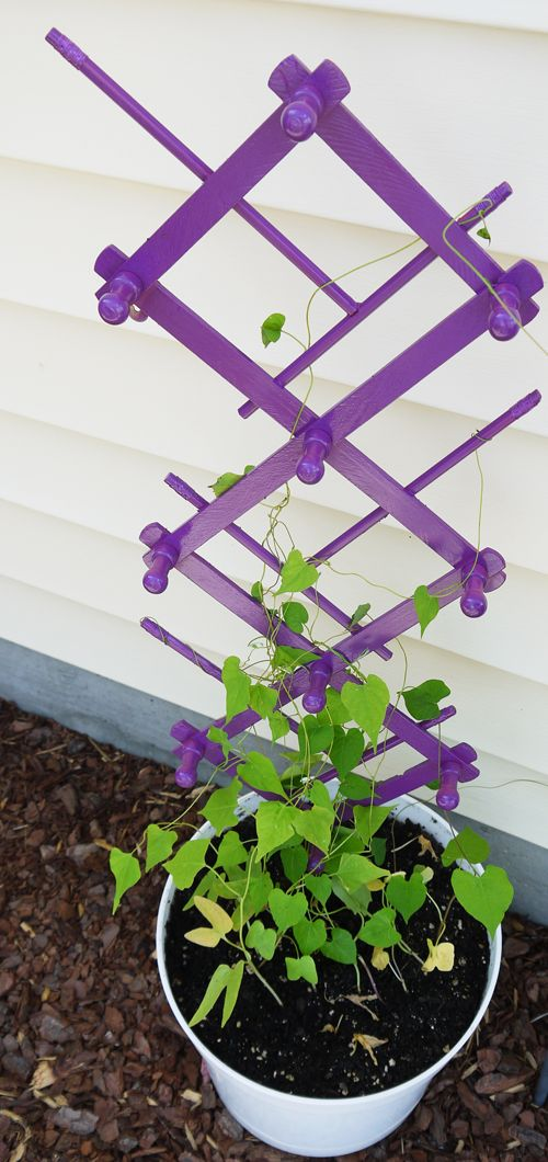 Purple Trellis for Small Spaces