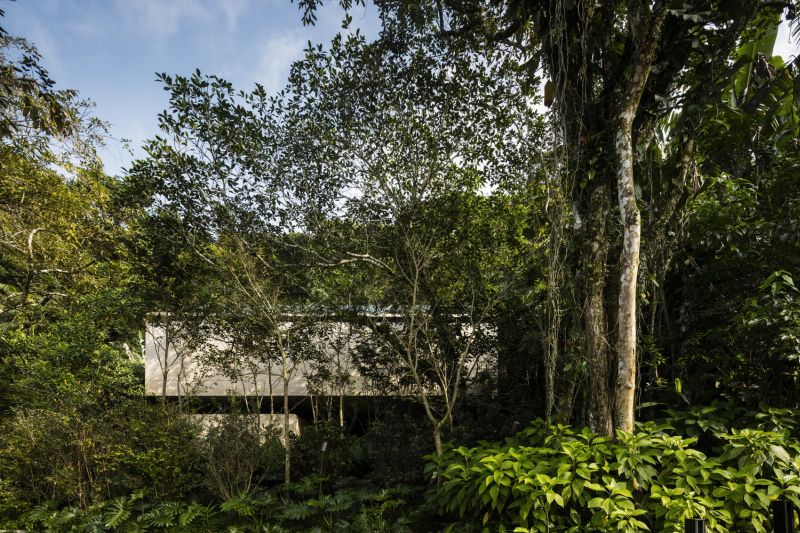 The Jungle House concealed by trees