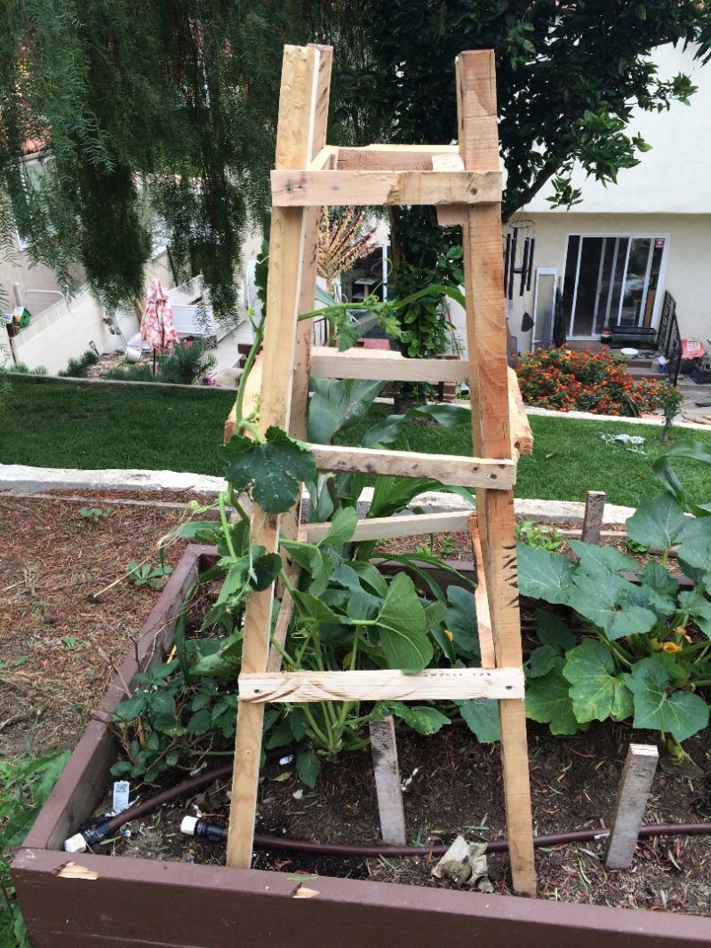 Trellis From Wooden Pallets
