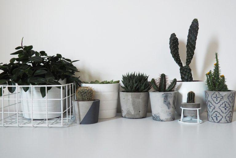 Cement plant pots
