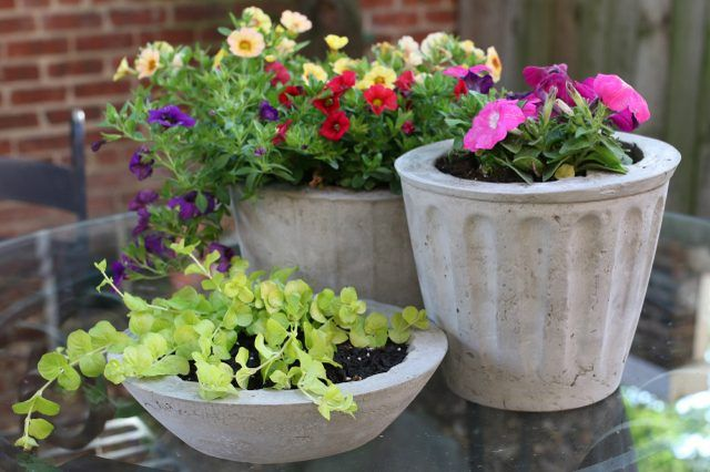 Concrete planters DIY