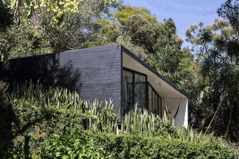 Contemporary cabin in Mexico spider plants