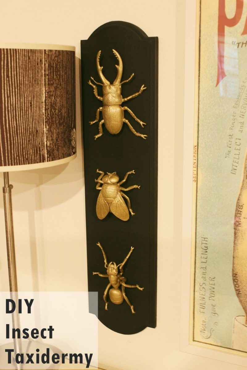 DIY Insect Taxidermy for a Happy and Creepy Halloween