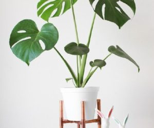 ... 15 DIY Plant Stands To Fill Your Home With Greenery Pictures Gallery