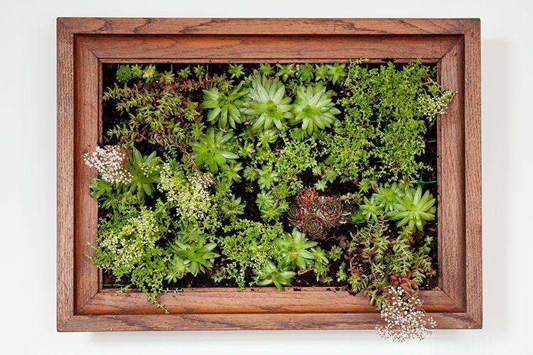 DIY vertical garden succulent