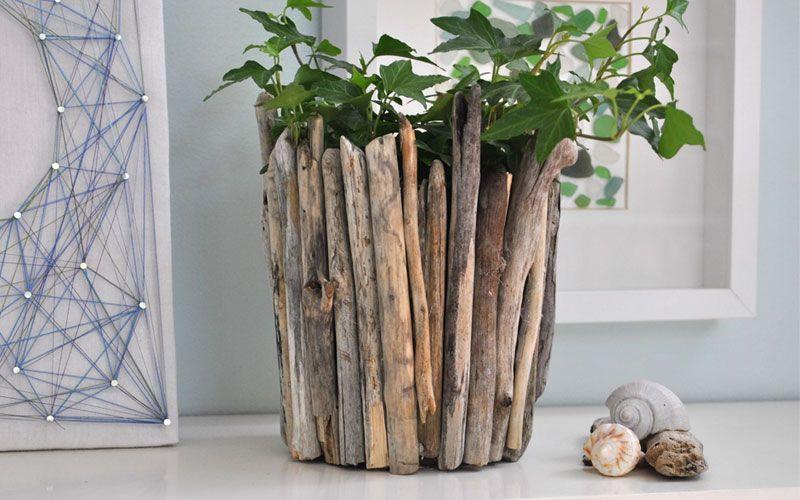 漂流木植物