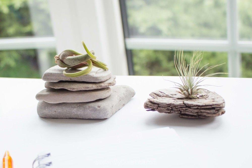 Driftwood succulent plants