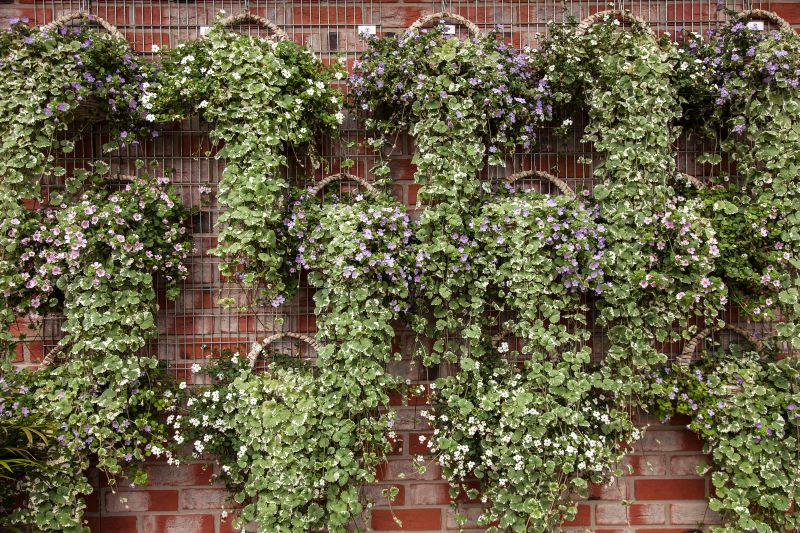 Hanging Plants in Baskets