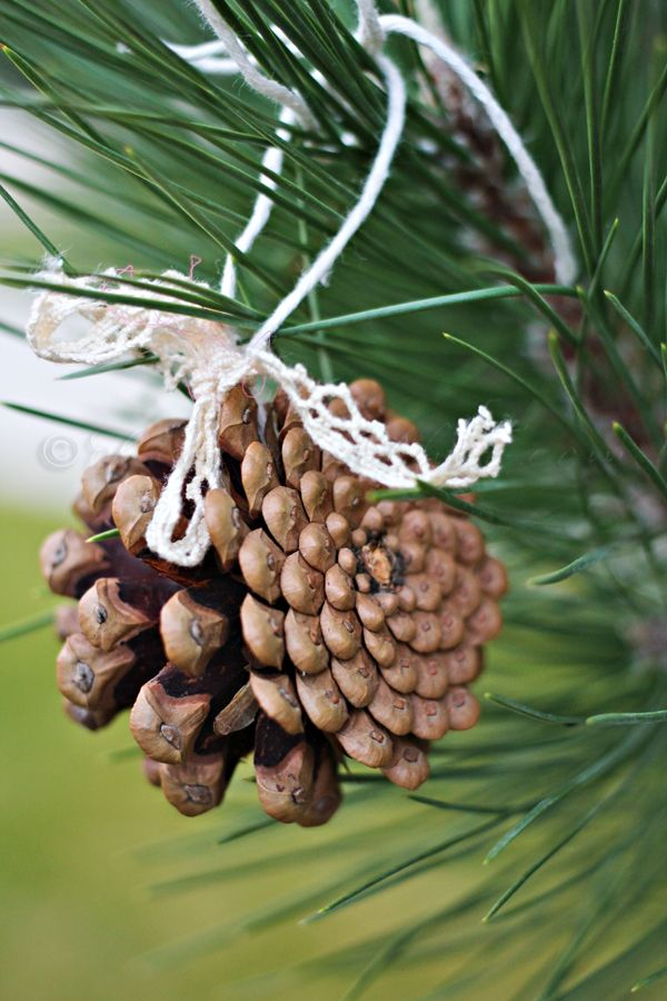 Simple hanging pine cones