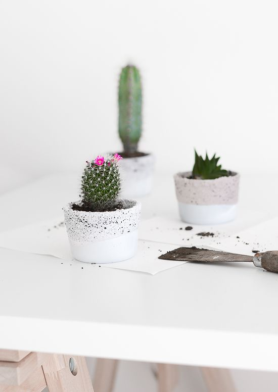 Tiny Concrete planters for Succulents