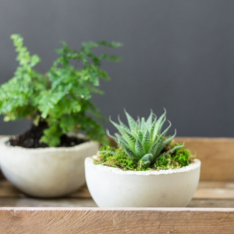 White concrete to create modern planters