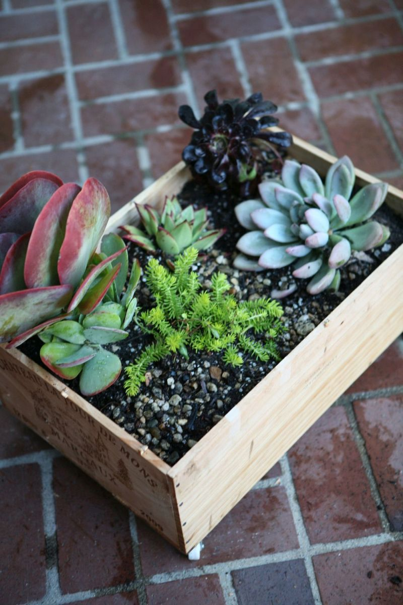 Wine crate succulent planter