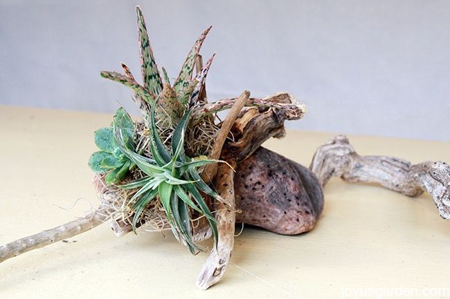 driftwood to make a beautiful arrangement