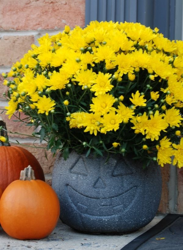 Concrete outdoor pumpkin planter