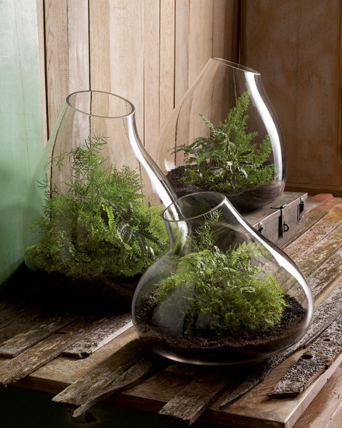 Modern glass terrariums
