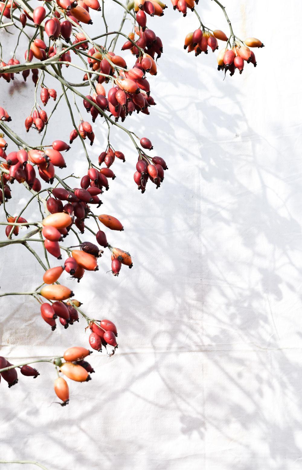 万圣节DIY的季节性花环