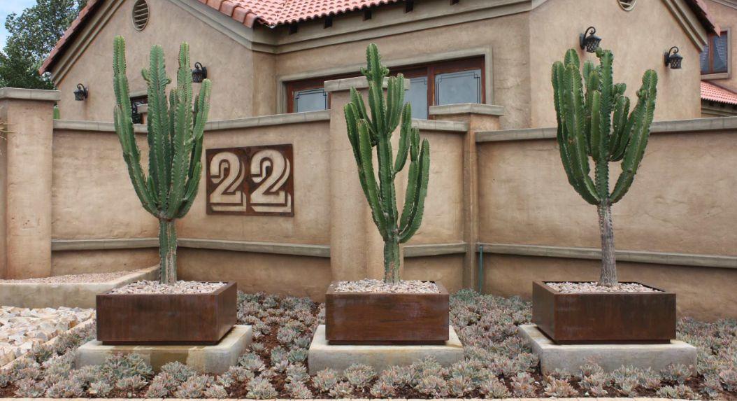 Cactus corten planter