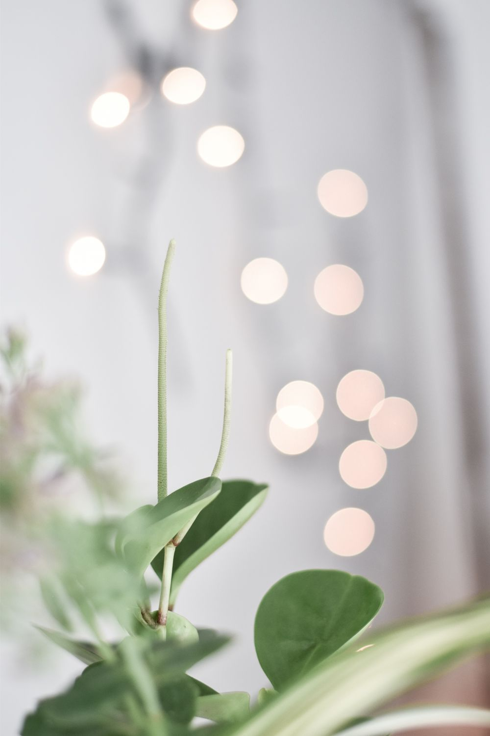 Green Festive Table Styling Accents