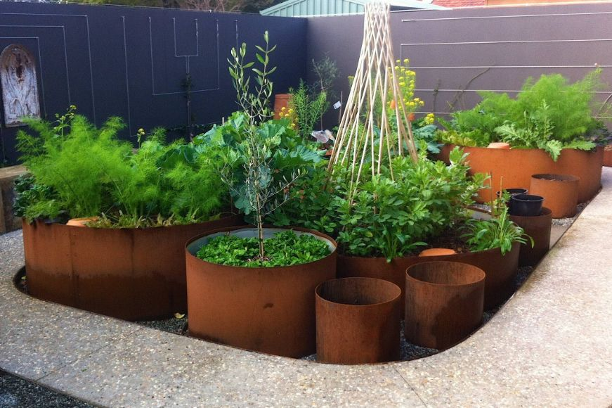 Growing plants in corten planters