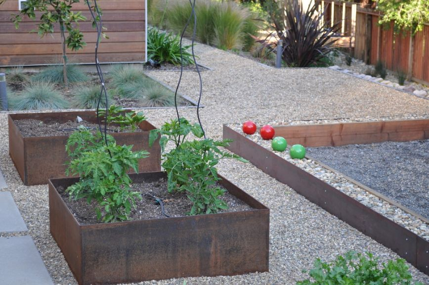 Growing tomatoes in corten planters