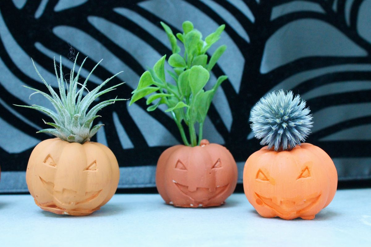 Halloween Pumpkin Air Plant Holders - Display