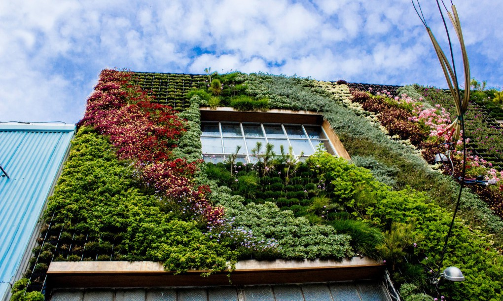 Living wall on San Francisco Wall
