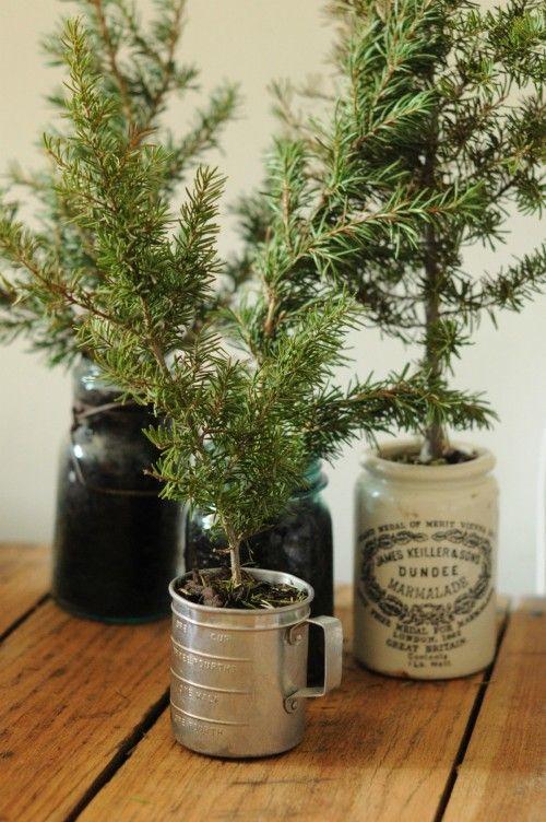Christmas trees mugs