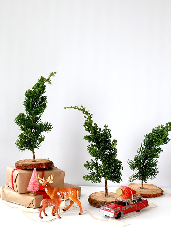 Fresh mini trees