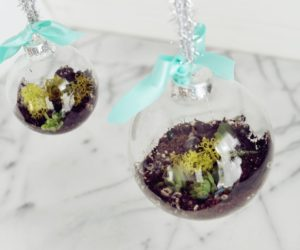 DIY Terrarium With Succulents – Dollar Tree Christmas Decorations