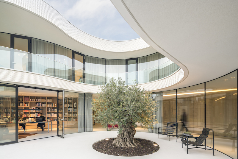 Curving House Facade Wrapped Around An Olive Tree
