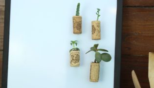 Turn Wine Corks Into Tiny Planters