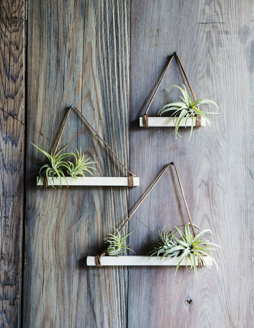 & 12 DIYs to Get Air Plants On Your Wall