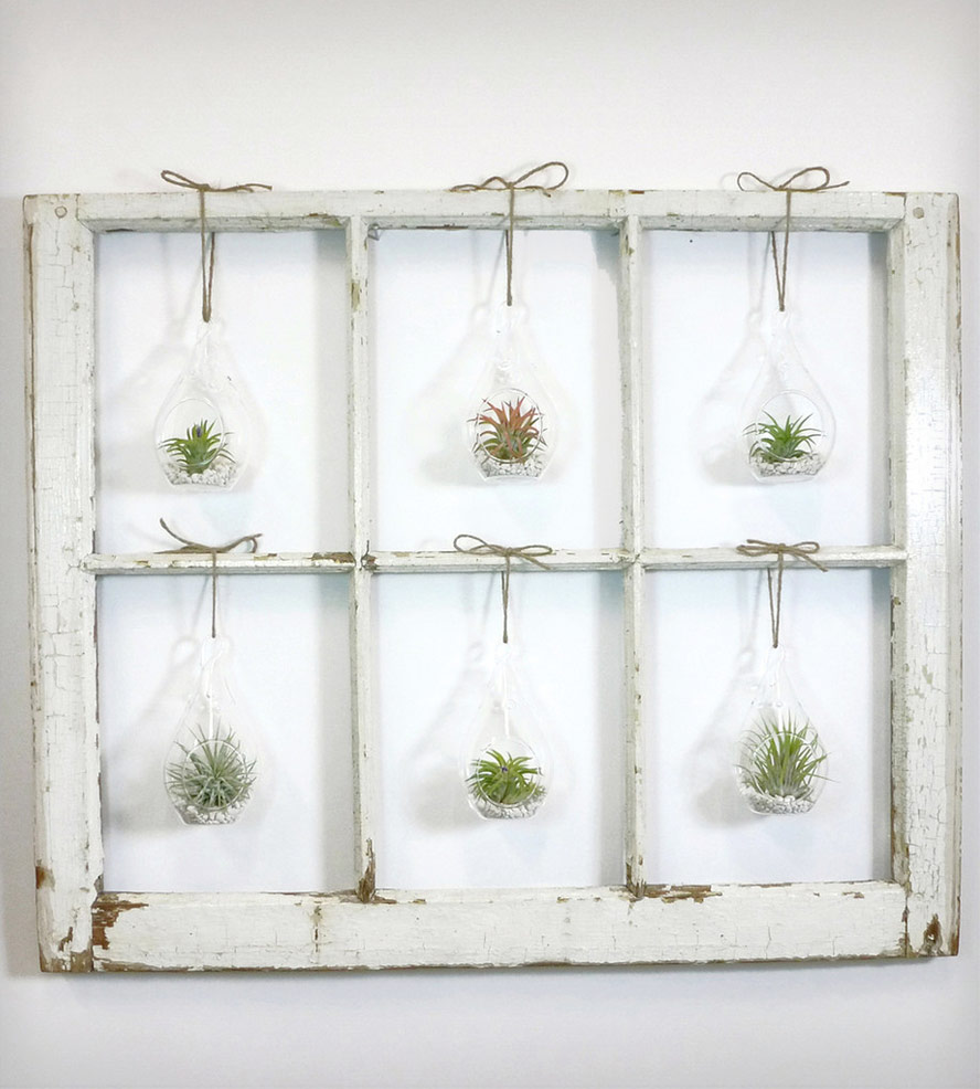 12 DIYs to Get Air Plants On Your Wall