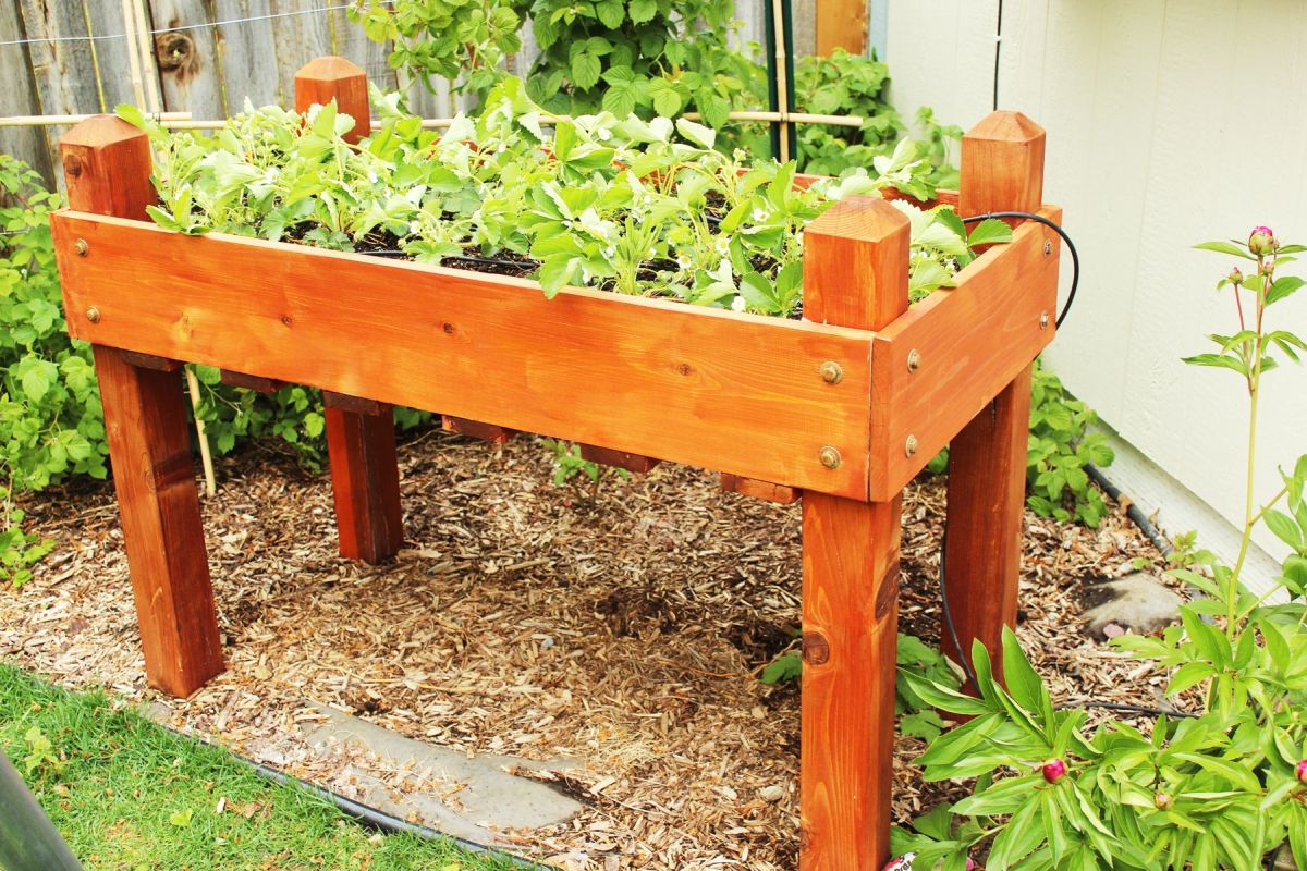 Raised Garden Bed Strawberry Plants Garden Design Ideas